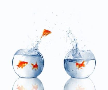 pesce ماهی